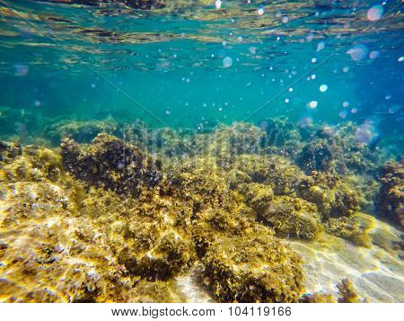 Rocky Sea Floor In Alghero
