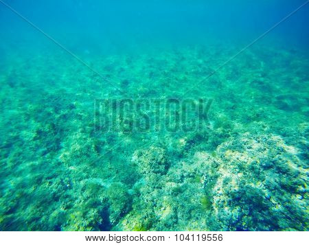 Green Sea Bed In Sardinia