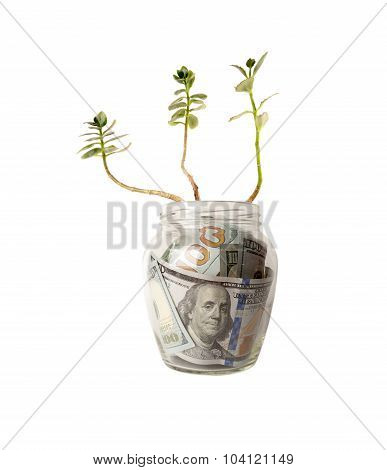 Green sprouts of dollar bills.