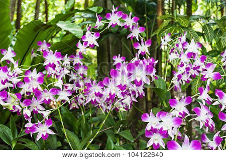 Beauty Purple Orchids