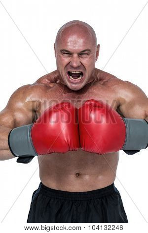 Aggressive fighter flexing muscles in gloves against white background