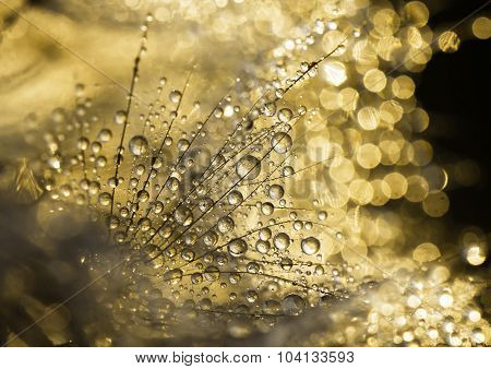Golden Dewdrops