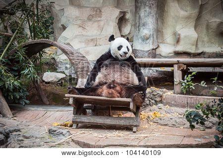 Very Big Panda