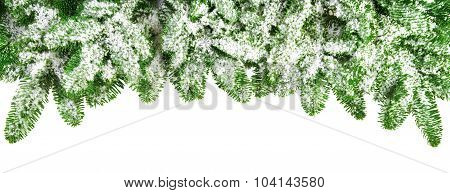 Snow Covered Fir Branches As A Border