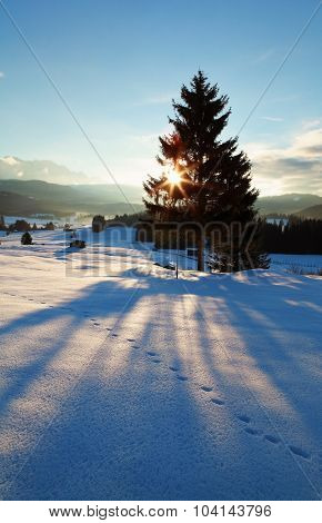 Sunbeams Behind Spruce Tree In Winter Alps