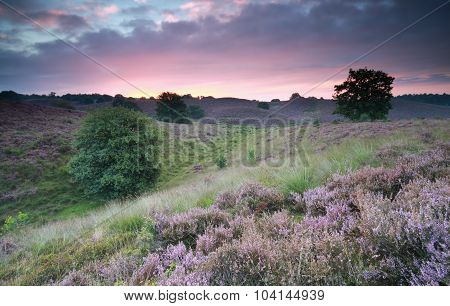 Beautiful Sunrise Over Hills With Flowering Heather
