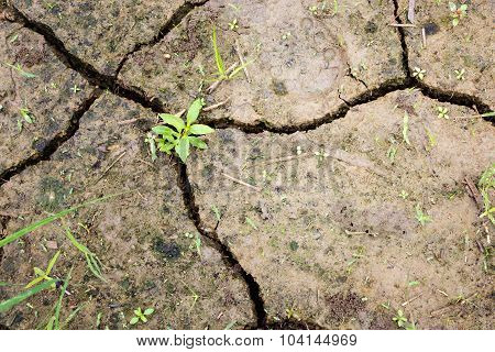 Plant And Raindrops On Cracked Ground After Stopped Raining