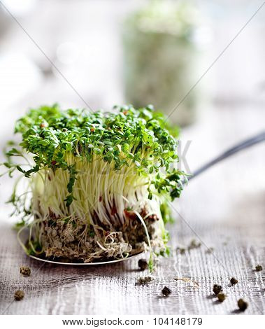 Water cress sprouts on a textile background