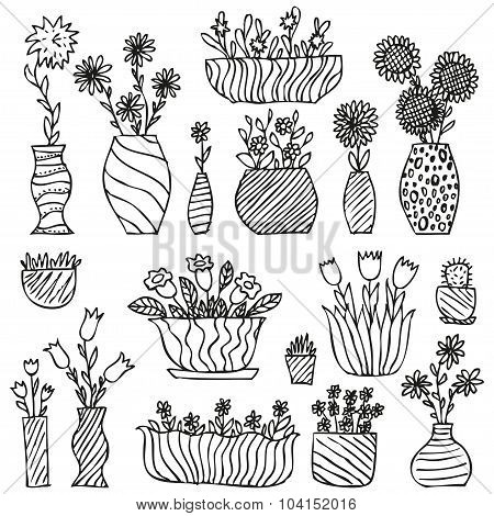 Hand drawn indoor plants in a pots, gloxinia, balsam, tulip, aster