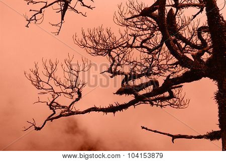 Dry Trees In The Forest