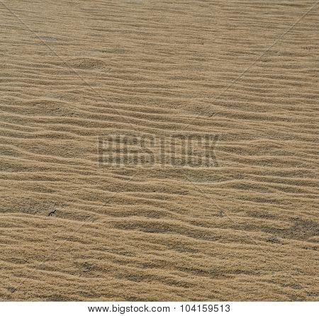 Wind Drifted Sand