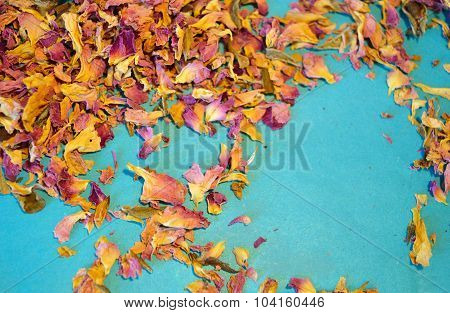 Scattered dried petals of tea rose on blue background