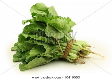 green chinese cabbage on white background