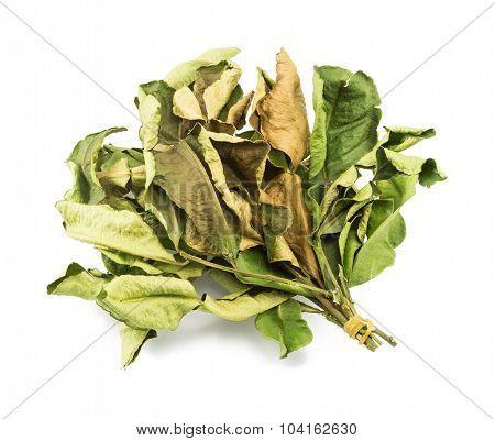 Kaffir Lime Leaves, Thai Dry Herb Isolated On White Background