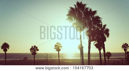 Sunset View With Palms In Santa Monica, California