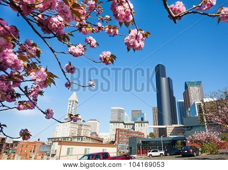 Cherry blossom and city view of Seattle downtown