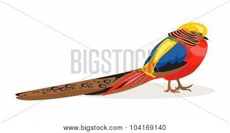 Golden Pheasant. Vector Illustration