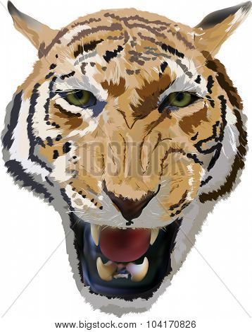 illustration with tiger portrait isolated on white background
