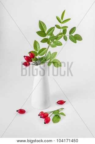 still-life with rosehips in white vase