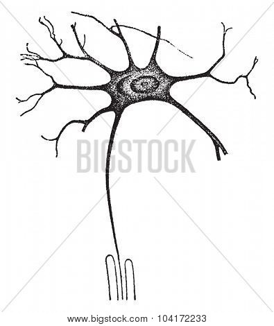 A nerve-cell worker, vintage engraved illustration.