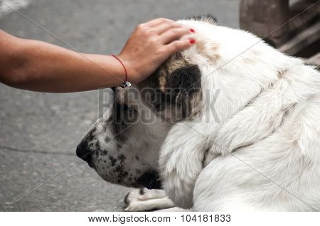 Woman's hand on dog head