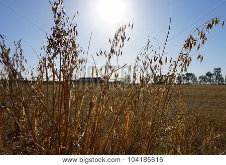 california_drought