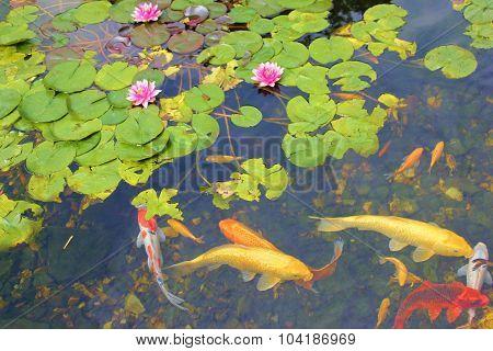 Koi Fish Garden