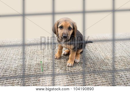 Sad Puppy In A Kennel