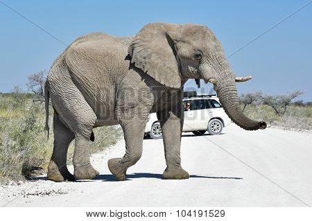Elephant - Etosha, Namibia