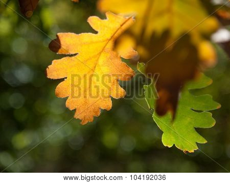 Yellow leaf on dark greed background. Shallow DOF. Focus on yellow leaf.