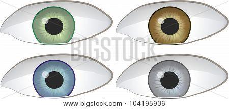 Set of Four Eyes