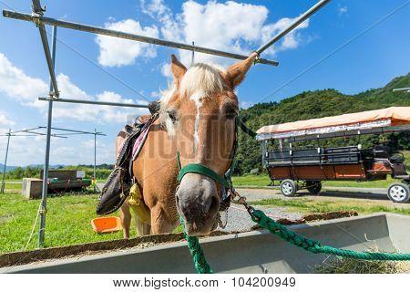 Horse during the feeding on the farm