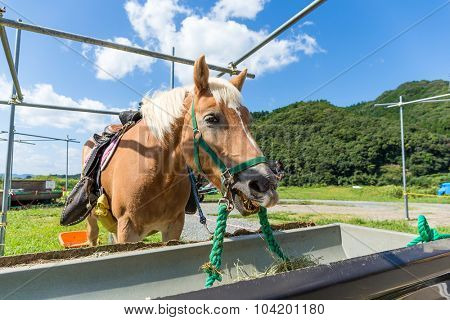 Horse eating hay with clear blue sky