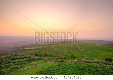 Beautiful sunset view of Czech countryside with vineyards