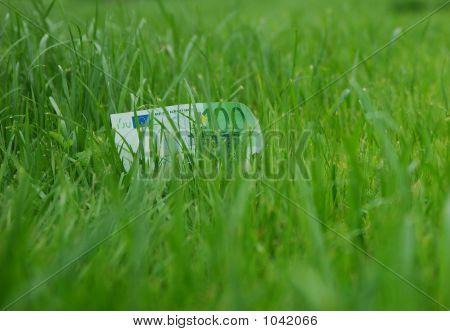 Money At Grass