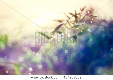 Natural Bokeh From Bamboo Leaf, Abstract And Soft Color Style