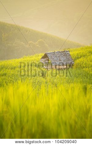 Bamboo Hut In Rice Terrace