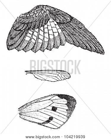 Wings, vintage engraved illustration. Dictionary of words and things - Larive and Fleury - 1895.