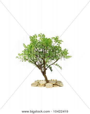 Árbol de dinero