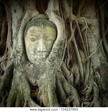 Ayutthaya buddha head