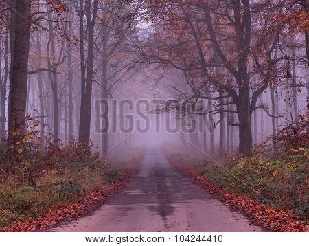 Misty Autumn Road Thru Savernake Forest Wiltshire UK
