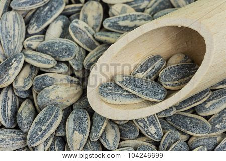 Sunflower Kernel Roasted