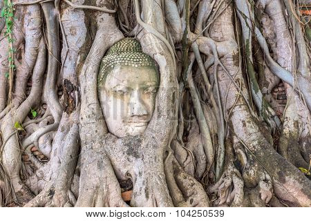 Ayutthaya, Thailand at the Buddha head entwined in roots at Wat Mahathat.