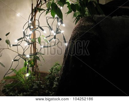 Light string in large plant