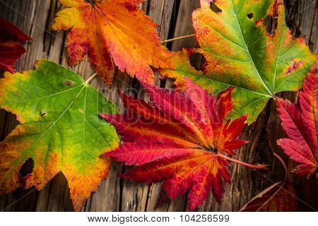 Colorful autumnal background with leaves