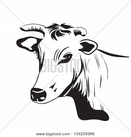 Cow drawing ornament decoration