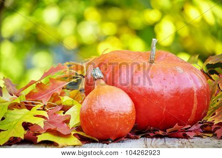 pumpkin and squash in an autumn garden with colorful golden foliage on the trees standing on an old wooden table with red and yellow fall leaves, with copyspace