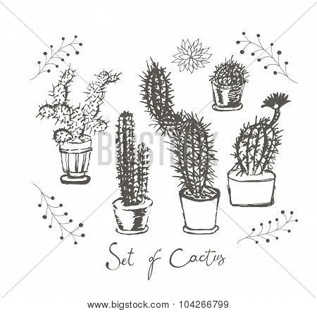 Set of cactus in a pots.