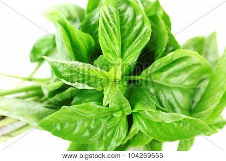 Fresh basil leaves close up