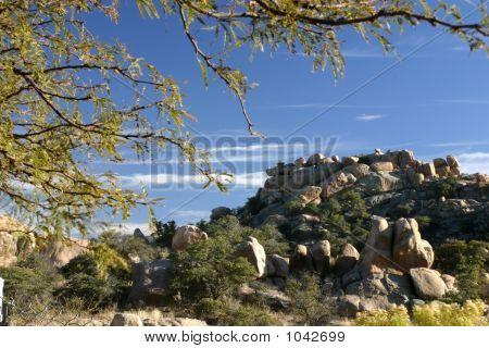 Texas Canyon Mesquite